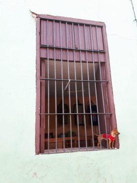 trinidad dog