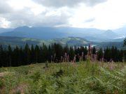 sunshine coast trail hike lewis lake to tin hat mountain